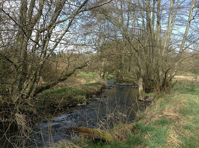 Circuit randonnette - Découverte de Champs, ses herbages et ses cours d'eau