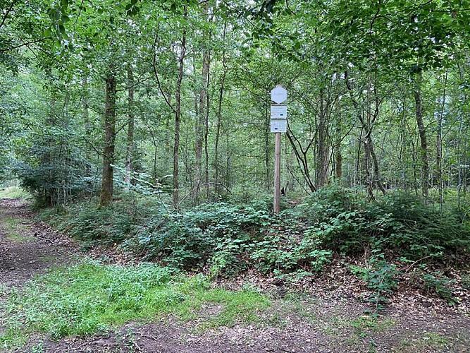 10 Promenade du Bois de Gonrieux - balise bleue