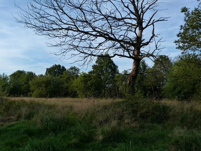 35 Promenade du Gué des Bagneaux - balise verte