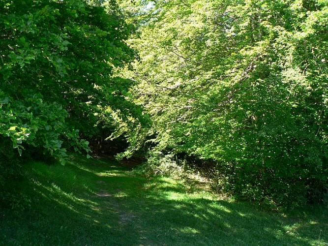 Sentiers des vieux moulins (grande boucle n°17)