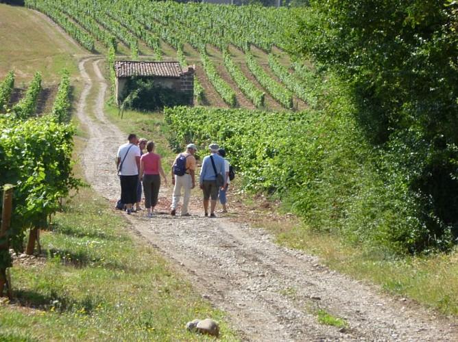 Sentier Viticole - 4,9 km - Millery