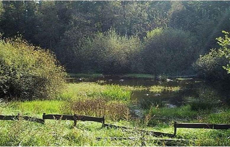 Les magnifiques bois de la Vecquée - Seraing