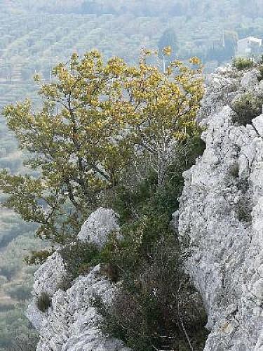 Topo 13 : Alpilles - Mouriès au coeur d'une oliveraie