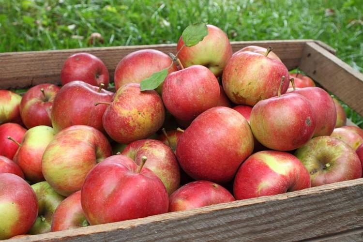 cagettes de pommes de la vallée de la Durance