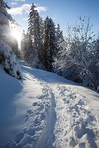 A travers les alpages - randonnée raquettes pays d'Evian