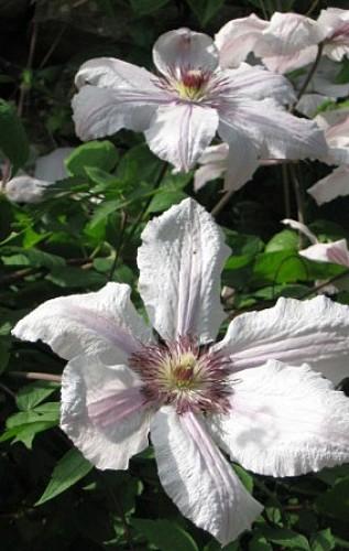 Fleurs et jardins du Val d'Arguenon