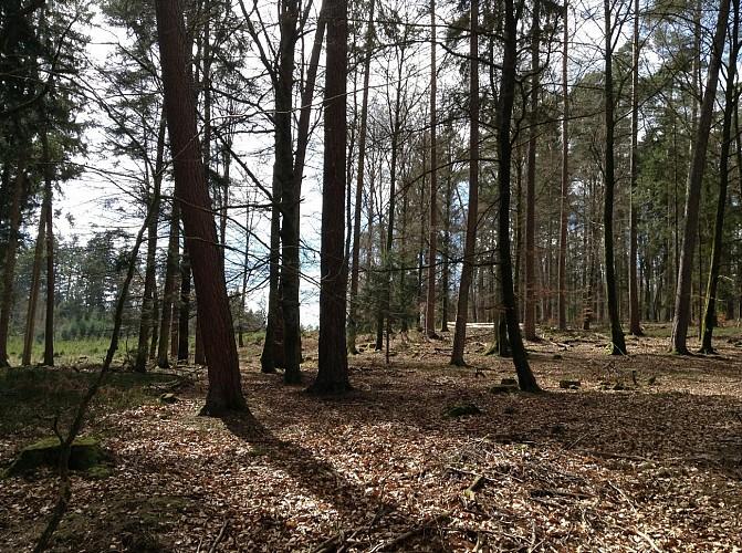 Circuit randonnette - Lavacherie, balade au coeur de la forêt ardennaise