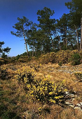 Boucle des mégalithes - Monteneuf