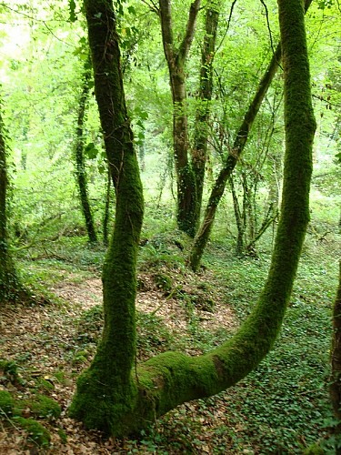 Sentier botanique - Lizio
