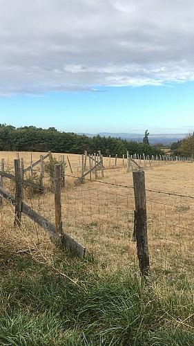 Sentier faune et flore autour du Bernand