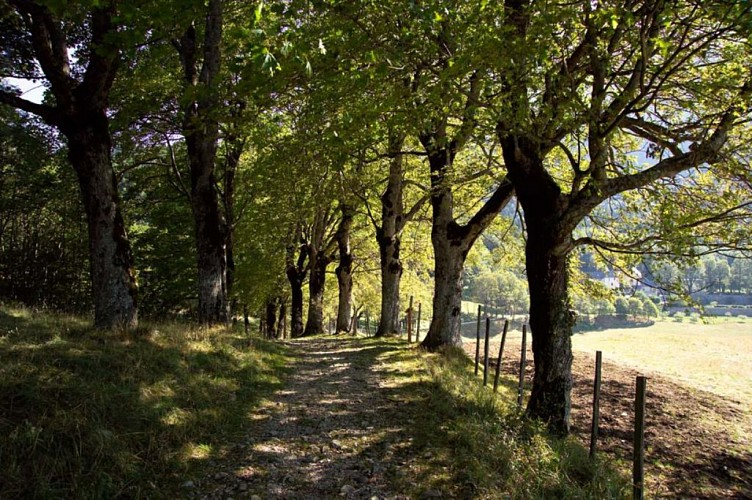 Circuit pédestre : Les Alpages de Chartreuse