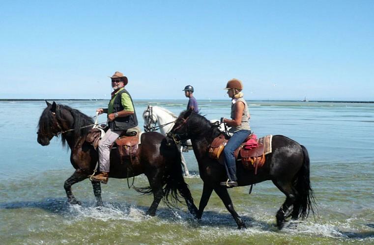 A cheval la traversée de la Baie de Saint-Brieuc