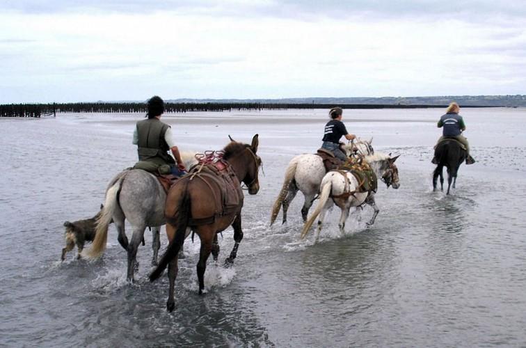 A cheval sur l'Equibreizh Nord