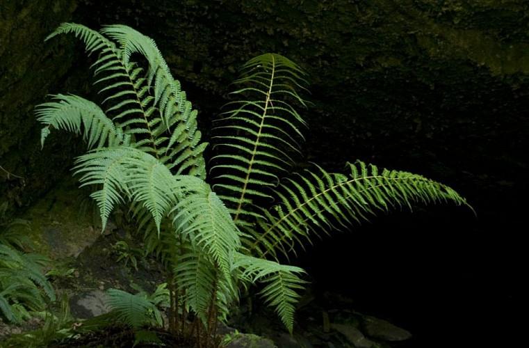 Balade dans les Bois de Caurel