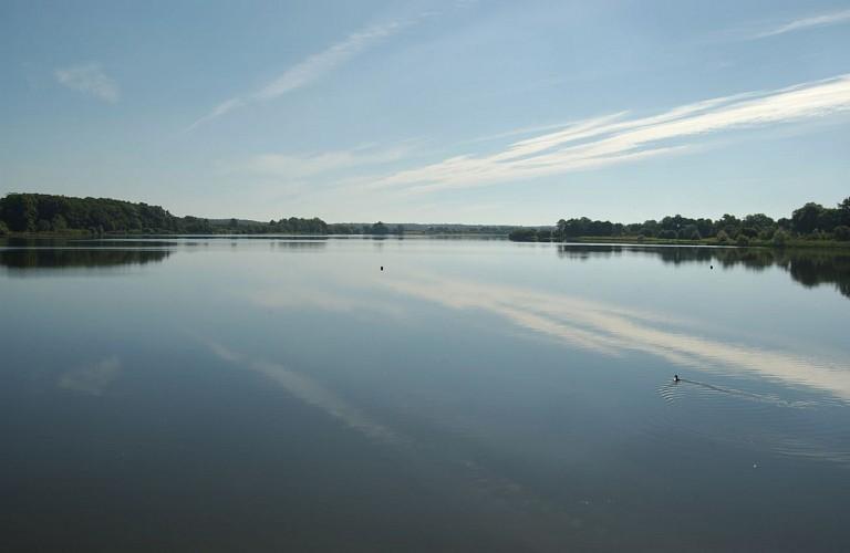 Découvertes et balade nature à l'étang de la Provostière - RIAILLÉ