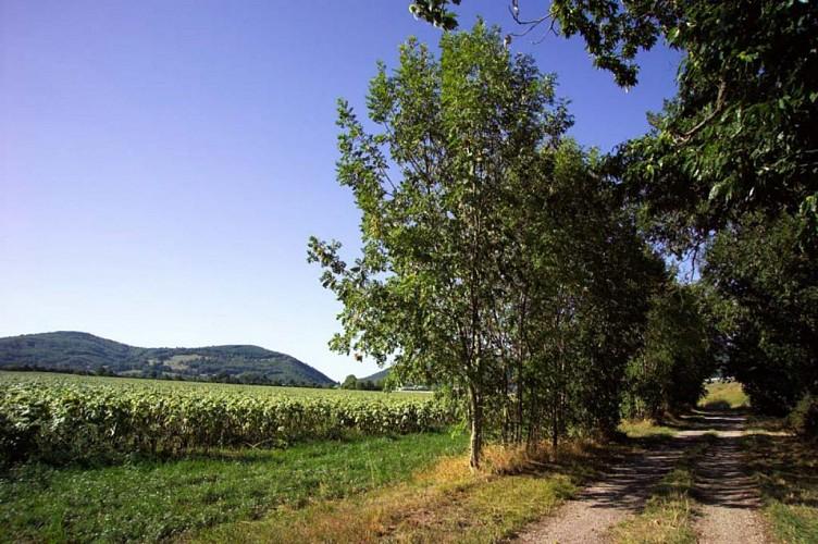 Walking trail: Bessey woodland