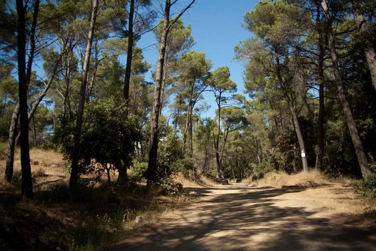Sentier découverte de Belle Pierre
