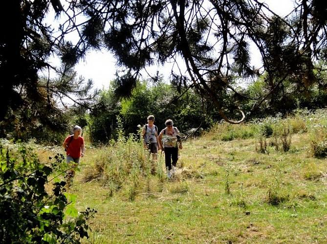 Le circuit des pelouses en Haute-Saône - Gy - Vallée de l'Ognon