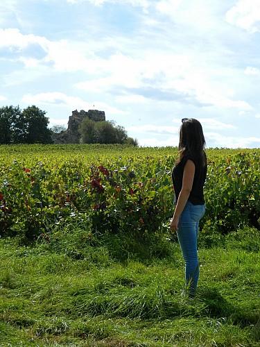 Balade aux Pierres Meslières, entre vignes et bords de Loire - SAINT GÉRÉON