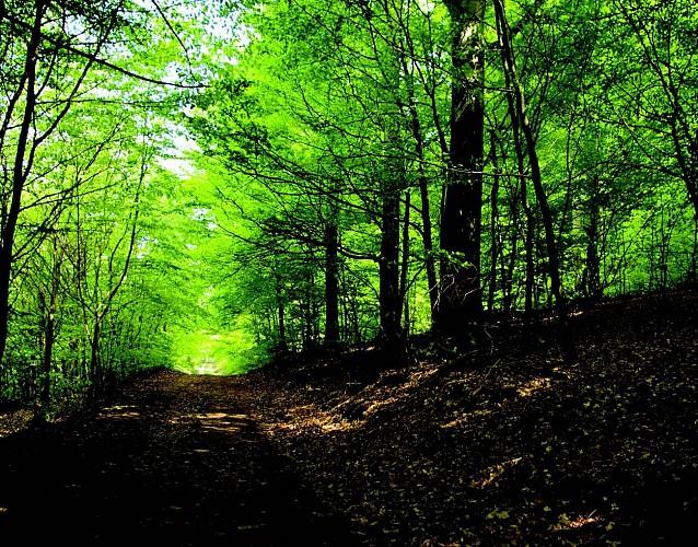 La forêt des Lauriers