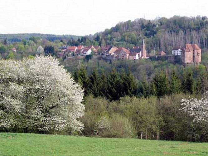 La Petite Pierre depuis Tieffenbach
