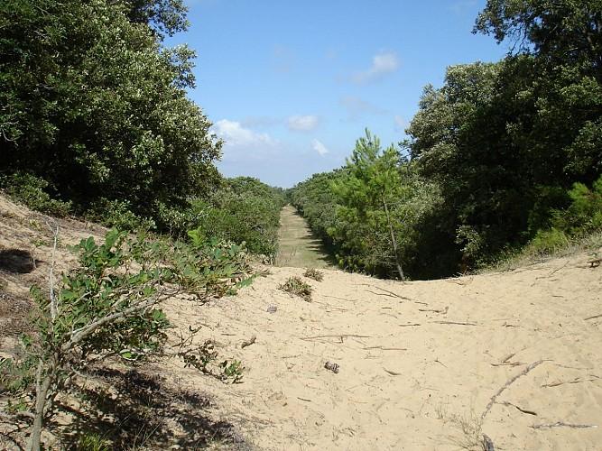 Sentier bleu en forêt de Longeville sur Mer