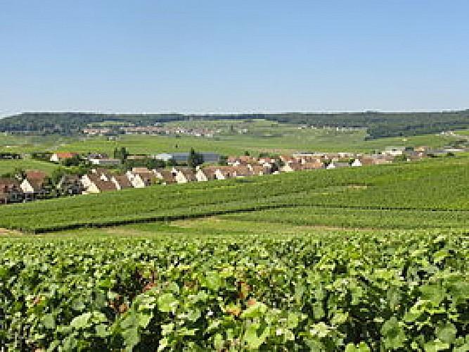 Circuit entre vignes et cultures