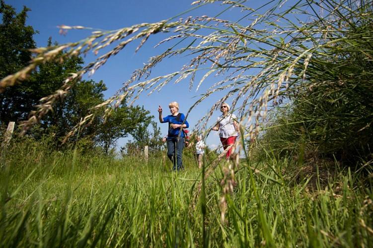 D'un étang à l'autre - Herbes hautes, herbes courtes