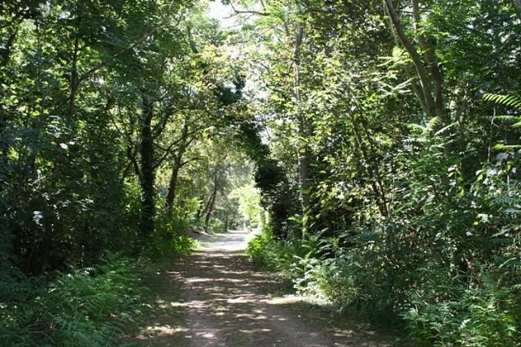 Sentier vert en forêt de Longeville sur Mer