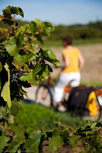 Biking on the vineyard of Chateauneuf du Pape :