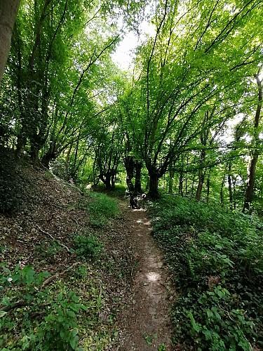La vallée du ruisseau des Awirs, la vallée du Brouçou, la Gleixhe et l'Alloue. (Flémalle)