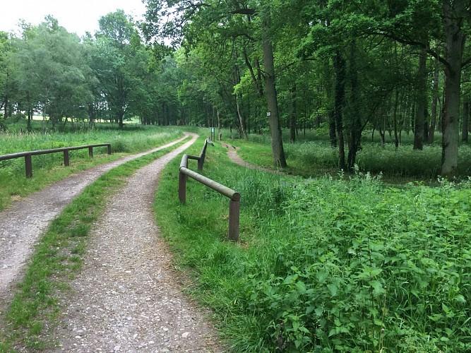 Court circuit de running / jogging à Dombasle-sur-Meurthe