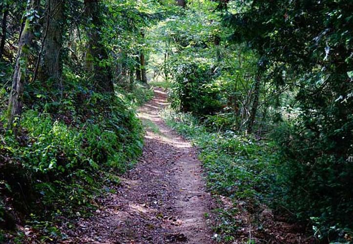 Paysage et randonnée en Pays de George Sand - Indre - Berry