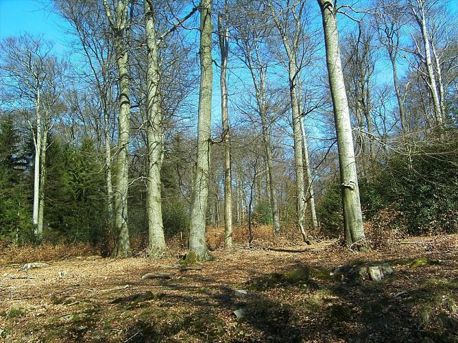 """La Roche-en-Ardenne - """"Promenade Royen"""" (2)"""