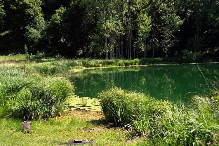 Rando pédestre Lac Saint Sixte Valdaine
