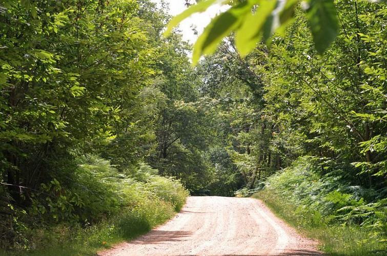 Sentier Le Bois du Curé et des mille Diables