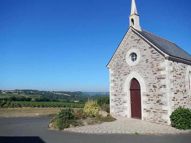 Randonnée Une autre Loire : Entre Loire et vignoble à Drain