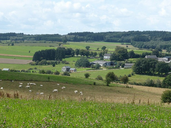 From Fields of War to Roads of Peace – Tour of the Bastogne Area