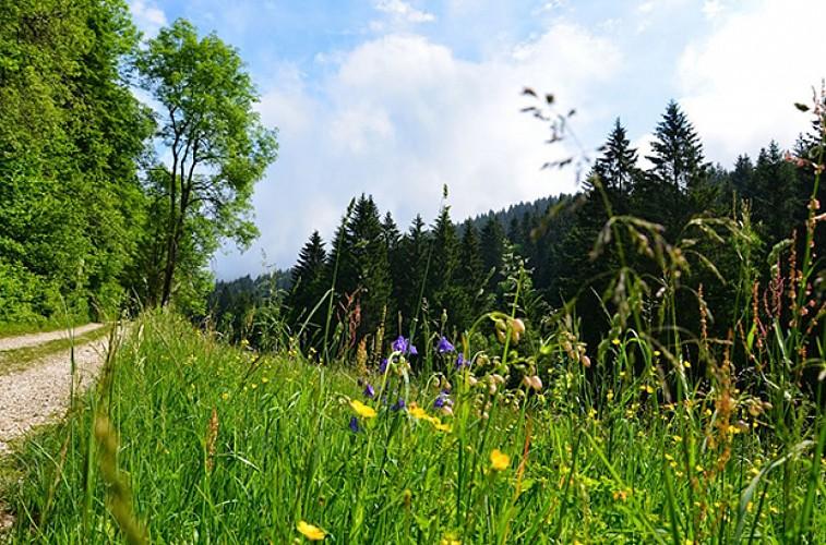 Les Ecouges par le Col de Romeyère