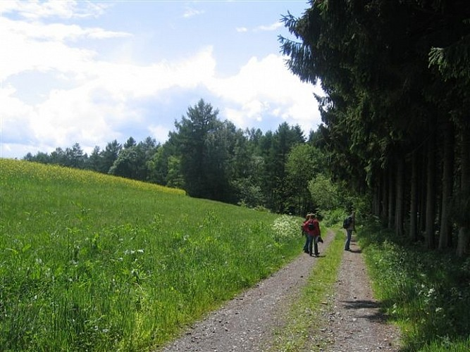 Promenade du Chêne au Gibet