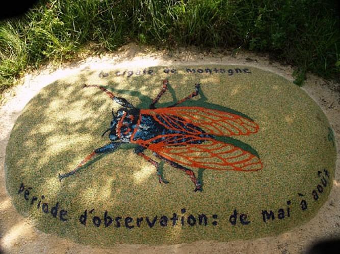 Balade au naturel - Génicourt-sur-Meuse