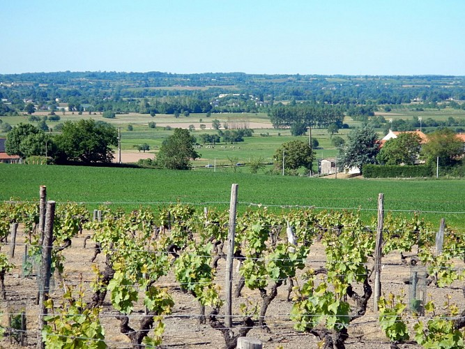 Randonnée Une autre Loire : Des moulins à la vigne au Mesnil-en-Vallée