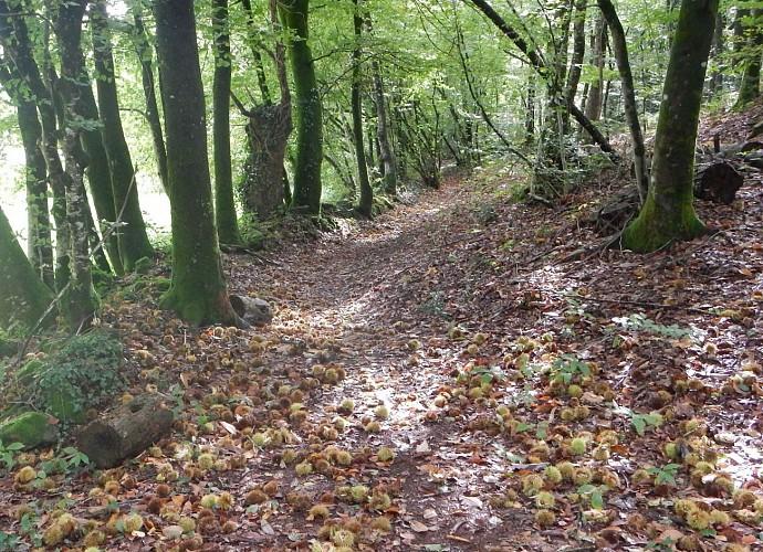 Popinettes Trail, Questembert