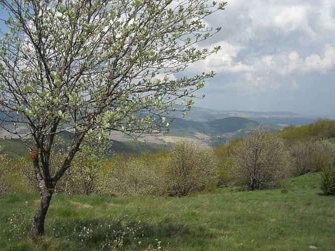 Balade sur les Landes du Beaujolais