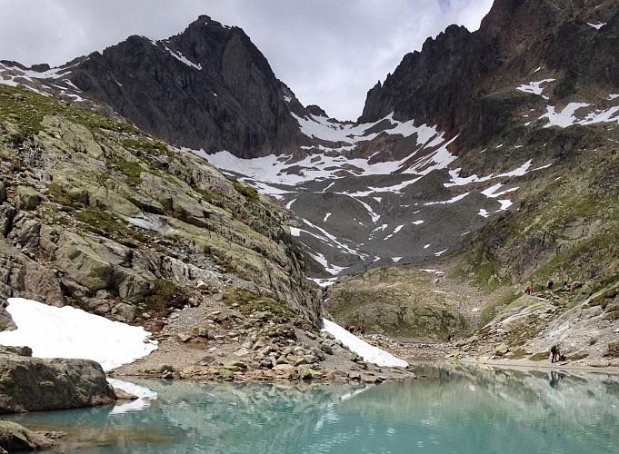 Chamoix sur le chemin du lac blanc
