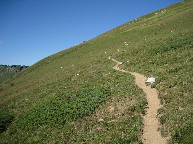 La Pointe d'Uble, à la rencontre des mouflons