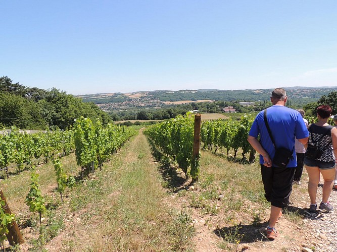 Wine trails at the heart of the vineyards
