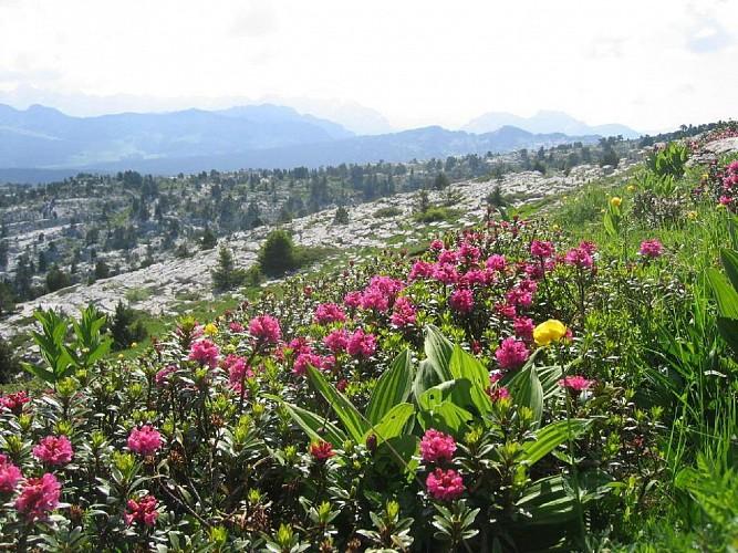 Plateau du Parmelan