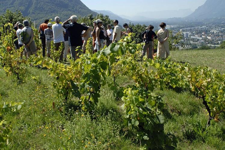 Poterne des Vignes Trail