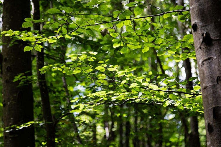 Forêt Mandallaz